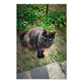 Gato negro cojinete