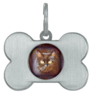 gato negro placas mascota
