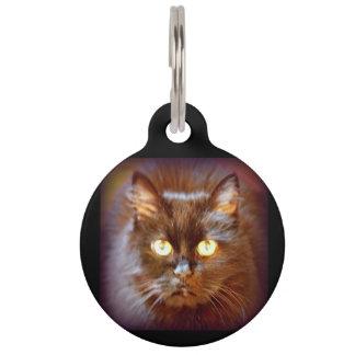 gato negro placas para mascotas