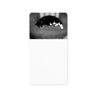 gato negro que duerme en la foto del bw de la sill etiquetas de dirección
