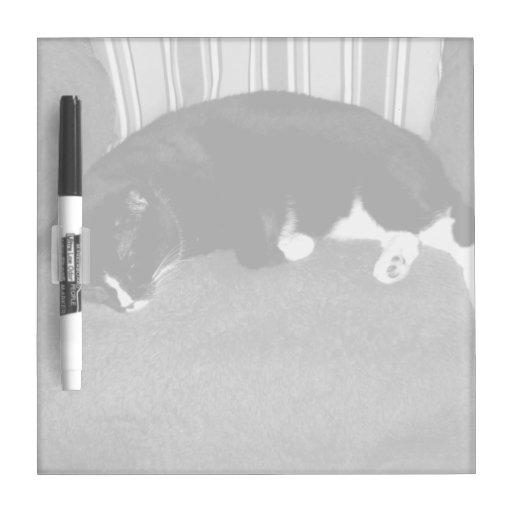 gato negro que duerme en la foto del bw de la sill pizarra