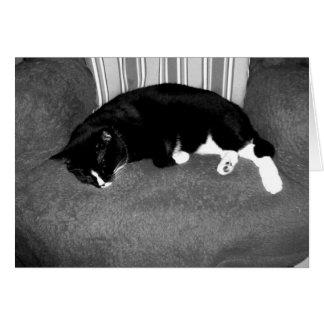 gato negro que duerme en la foto del bw de la sill felicitaciones