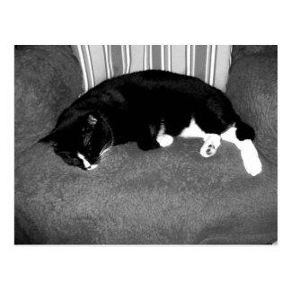 gato negro que duerme en la foto del bw de la sill postal