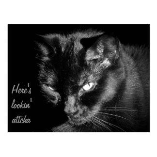 Gato negro que le mira tarjetas postales