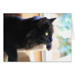 Gato negro que mira hacia fuera la ventana, interi tarjeta