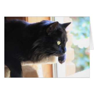 Gato negro que mira hacia fuera la ventana, tarjeta pequeña