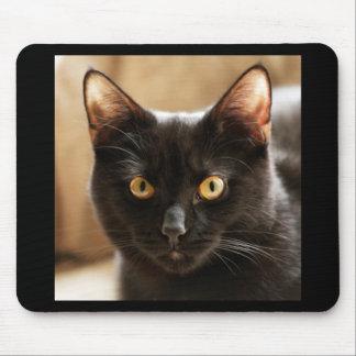 Gato negro que mira ojos de la cámara cerca para alfombrillas de raton