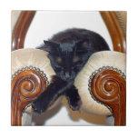 Gato negro relajado que duerme entre dos sillas azulejo cerámica