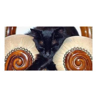 Gato negro relajado que duerme entre dos sillas tarjeta fotografica
