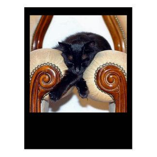 Gato negro relajado que duerme entre dos sillas