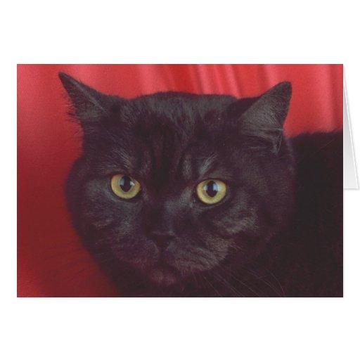 Gato negro - ROJO Tarjeton