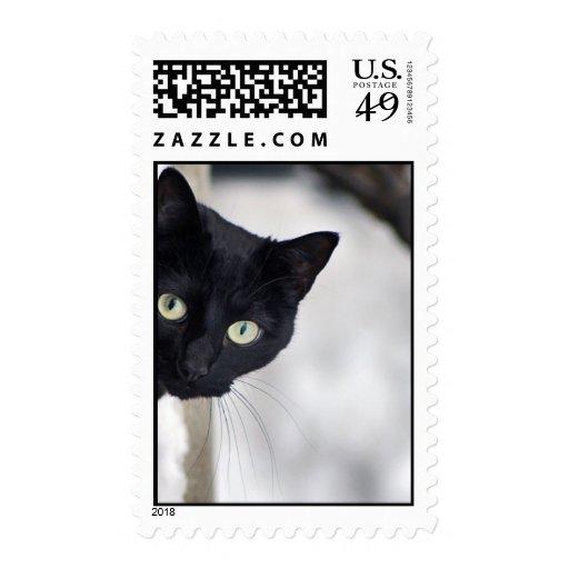 Gato negro sellos