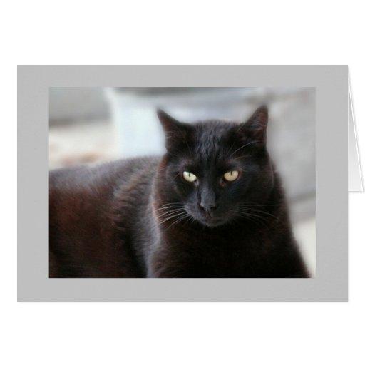 Gato negro tarjetas