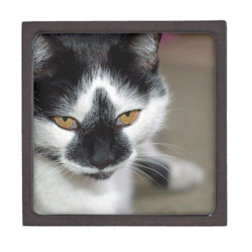 Gato negro y blanco caja de joyas de calidad