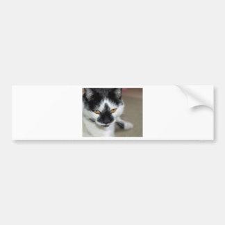 Gato negro y blanco pegatina para auto