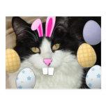 Gato negro y blanco de Pascua Postal