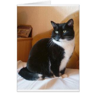 Gato negro y blanco lindo en cama tarjeta de felicitación