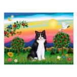 Gato negro y blanco - país brillante postal