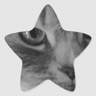 Gato (negro y blanco) calcomanía cuadrada personalizada
