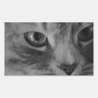 Gato (negro y blanco) pegatina rectangular