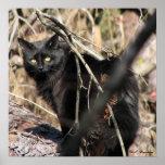 Gato Noir de la estrella prudente Impresiones
