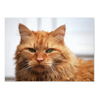 Gato noruego del bosque invitación 12,7 x 17,8 cm