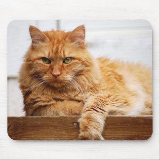 Gato noruego del bosque, rey de los gatos Mousepad Alfombrillas De Raton