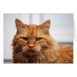 Gato noruego del bosque tarjeta de felicitación
