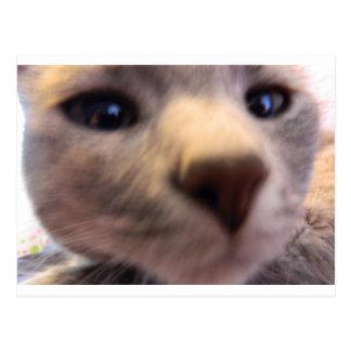 gato nosey tarjetas postales