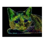 Gato observado azul de neón tarjetas postales
