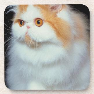 Gato observado y lindo del naranja posavaso