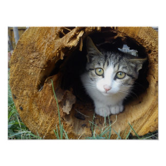 Gato obvio - es obvio impresiones