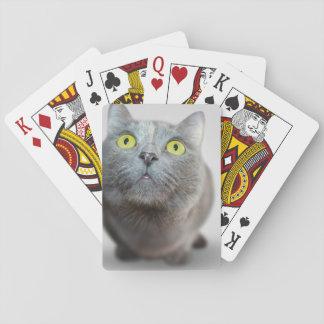 gato baraja de póquer