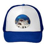 Gato orgulloso gorras de camionero