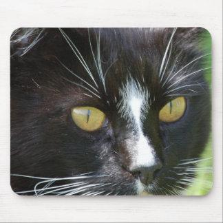Gato para arriba Mousepad cercano