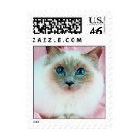 Gato pedigrí lindo adorable sello