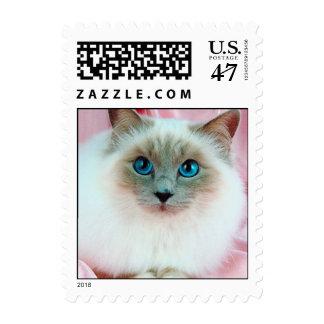 Gato pedigrí lindo adorable sellos