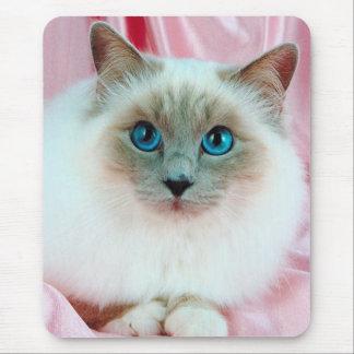 Gato pedigrí lindo mouse pad