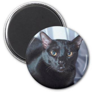 Gato pedigrí negro 1 imán redondo 5 cm