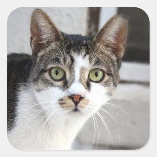 Gato Calcomania Cuadradas Personalizada