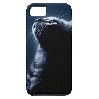 Gato pelado en el claro de luna iPhone 5 fundas