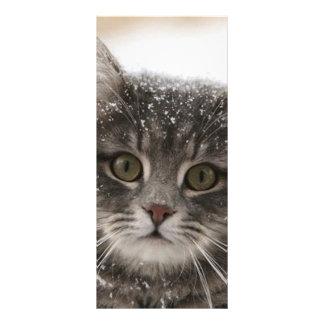 gato peludo de los animales de mascotas de las nev tarjeta publicitaria a todo color