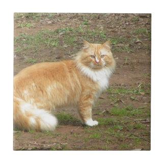 Gato peludo del naranja y del blanco azulejo cuadrado pequeño