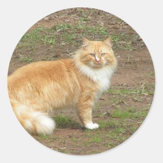 Gato peludo del naranja y del blanco pegatinas redondas