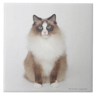 Gato peludo grande azulejo cuadrado grande