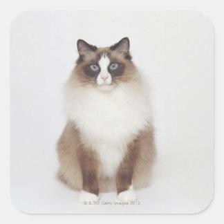 Gato peludo grande pegatina cuadrada