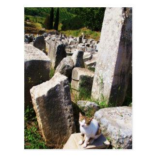 Gato perdido adorable que vive en las ruinas de Ep Postales