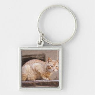 Gato perdido en Fes Medina, Marruecos 2 Llaveros Personalizados