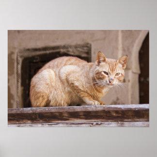 Gato perdido en Fes Medina, Marruecos 2 Impresiones