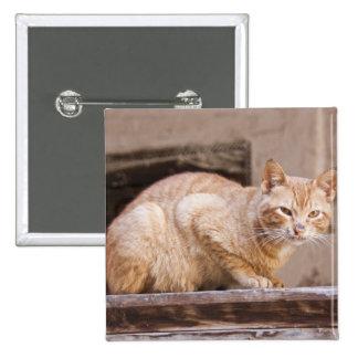 Gato perdido en Fes Medina, Marruecos 2 Pin Cuadrado